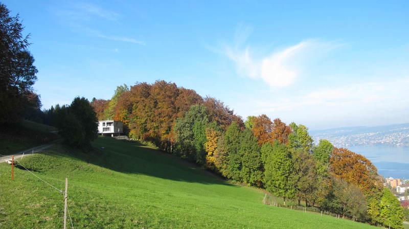 Pfadihus Holzgasse, 8810 Horgen - 1185