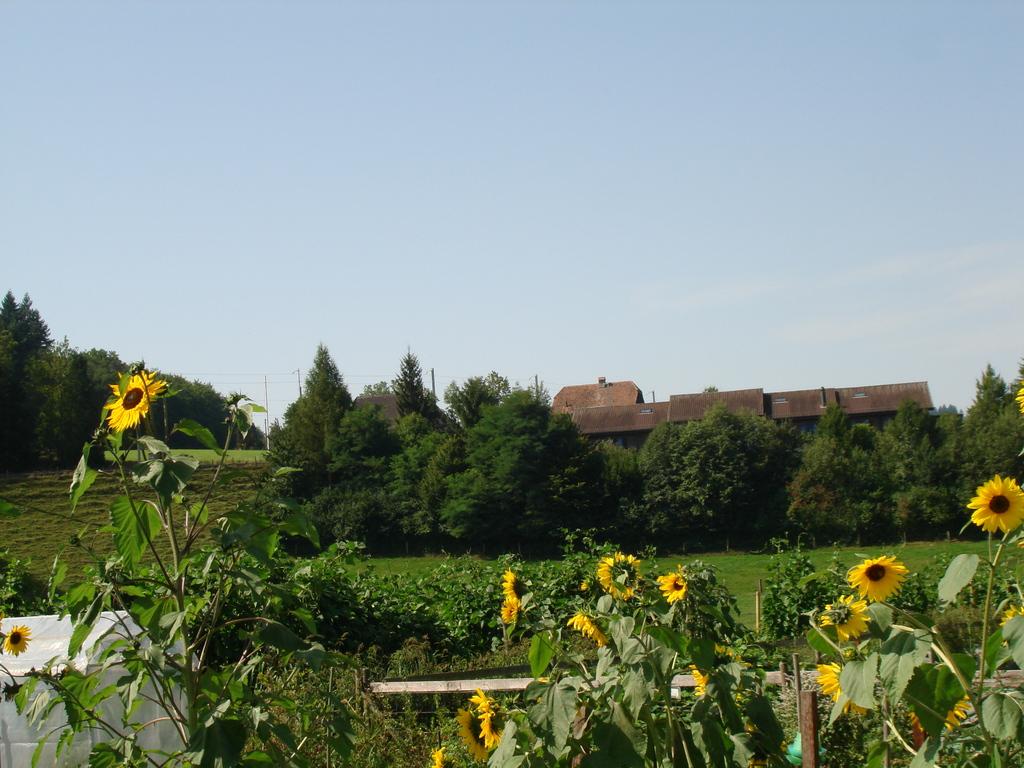 Weiermattheim, 3098 Köniz - 487